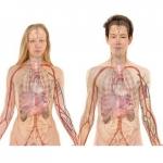 Kwantowy Bio Rezonansowy – Magnetyczny Analizator